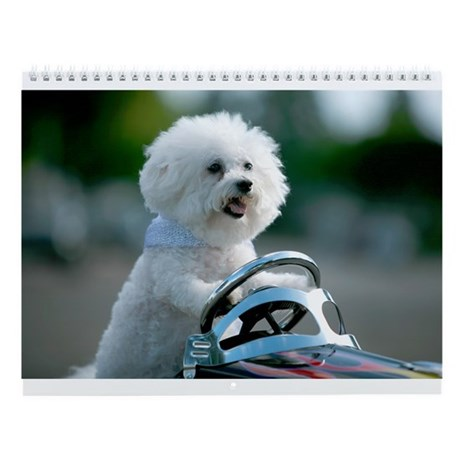 Fifi the Bichon Frise is always up to some new adv