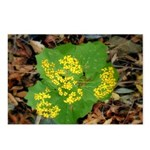 Yellow Flowers On Green Leaves Postcards (Package