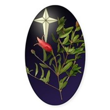 Pomegranate and Star Christmas Oval Decal