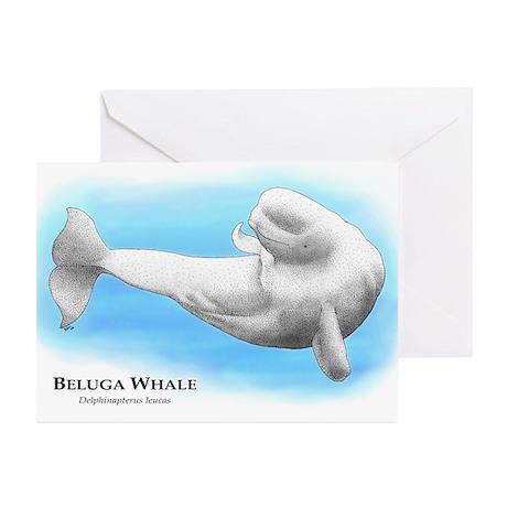 Beluga Whale Greeting Cards (Pk of 10)