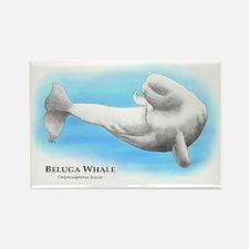 Beluga Whale Rectangle Magnet