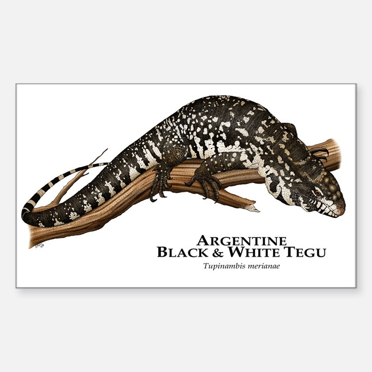 Argentine Black and White Tegu Rectangle Decal