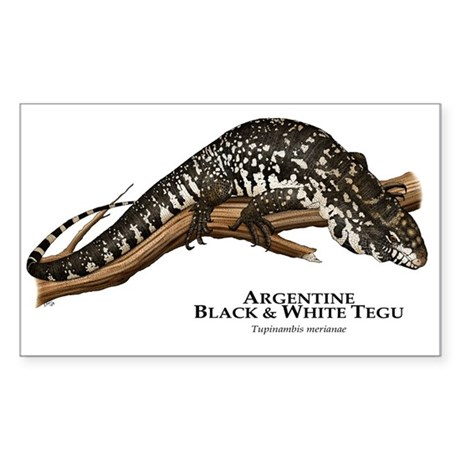 Argentine Black and White Tegu Rectangle Sticker