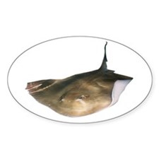 Fish on Oval Sticker (10 pk)