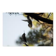 Dancing Hummingbirds Postcards (Package of 8)