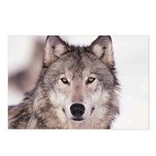 Unique Wolf Postcards (Package of 8)