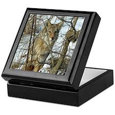 Michael Carr's Photo of Coyote Keepsake Box