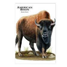 American Bison (Buffalo) Postcards (Package of 8)