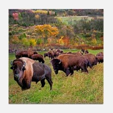 buffalo Tile Coaster