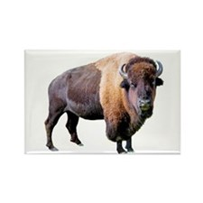 buffalo Rectangle Magnet (100 pack)