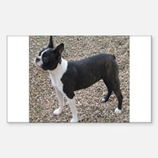 Boston Terrier Pup2 Rectangle Decal