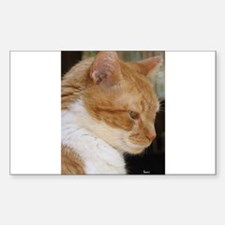 Merwyn: Yellow Tabby Cat Rectangle Decal