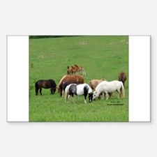 Mini Horses in Pasture Rectangle Decal