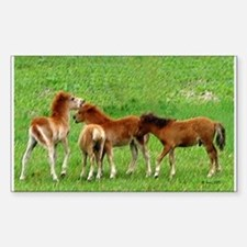 Mini Colts Playing In Field Rectangle Decal
