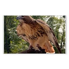 Red Tailed Hawk Ruffled Feath Rectangle Sticker 1