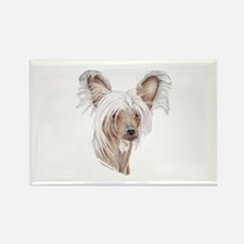 Chinese crested dog Rectangle Magnet (10 pack)