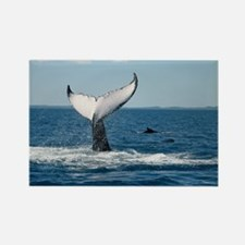 Whale Watch Rectangle Magnet