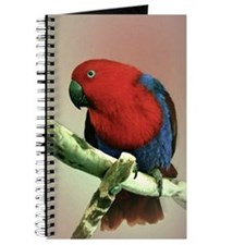 Female Eclectus Parrot Journal