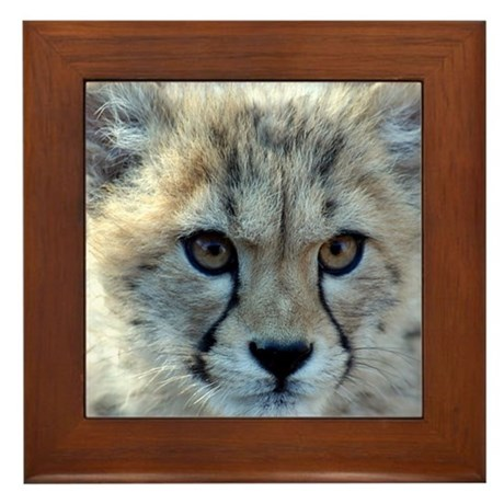 Cheetah Cub Framed Tile