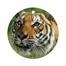Indochinese Tiger 2 Ornament (Round)