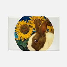 Cool Dutch rabbit Rectangle Magnet