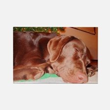 Sleeping Holiday Lab Rectangle Magnet