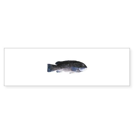 Blackfish - Tautog (m) Bumper Sticker