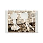 Voorburg Pigeon Pair Rectangle Magnet (100 pack)