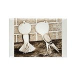 Voorburg Pigeon Pair Rectangle Magnet (10 pack)