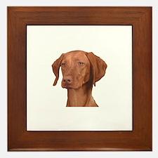 Vizsla Head Shot - Framed Tile