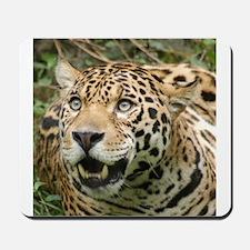 Jaguars Mousepad