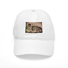 stripes the cat Baseball Cap