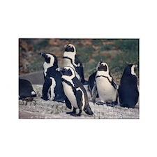 Penguin Parade Rectangle Magnet
