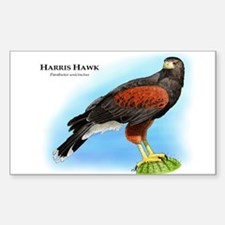Harris Hawk Rectangle Decal