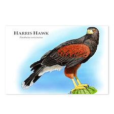 Harris Hawk Postcards (Package of 8)