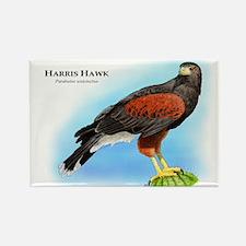 Harris Hawk Rectangle Magnet