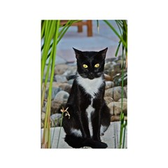 Black Cat in the Reeds Rectangle Magnet