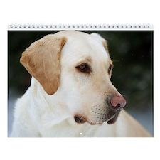 Labrador Retriever Wall Calendar - Beautiful Labs