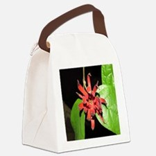 Anise Canvas Lunch Bag