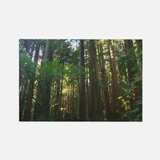 California Redwood + redwoods Photography Magnets