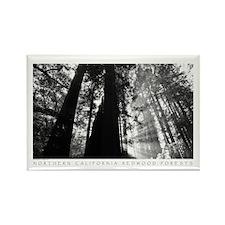 Redwood Forest Rectangle Magnet