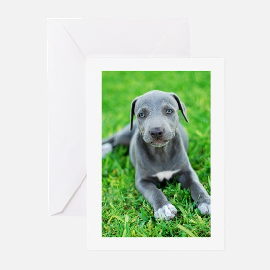 Lacy Holiday Cards - 20 Pack