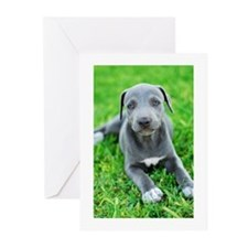 Lacy Holiday Cards - 10 Pack