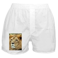 African Lion 2 Boxer Shorts