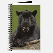 Black Jaguar Journal
