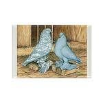 Lavender West Pigeons Rectangle Magnet (100 pack)