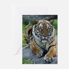 Tiger 4 Greeting Cards (Pk of 10)