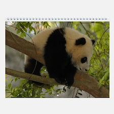 Baby Panda Cub Wall Calendar