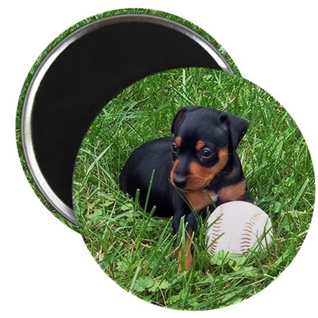 """MIN PIN 2.25"""" Magnet (10 pack)"""