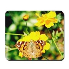 Marigold Butterfly - Mousepad